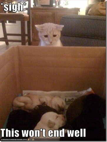 funny-pictures-cat-does-not-like-puppies